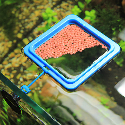 India kyrgyzstan aquarium fish tank aquarium feeder feeding feeding ring ring ring small aquarium fish tank feeding feeding feeding fish food floating ring