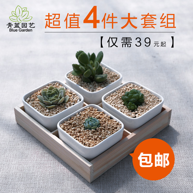 Large potted succulents combination combo 4 sets containing soil meng fleshy succulents plants indoor balcony flower pots containing