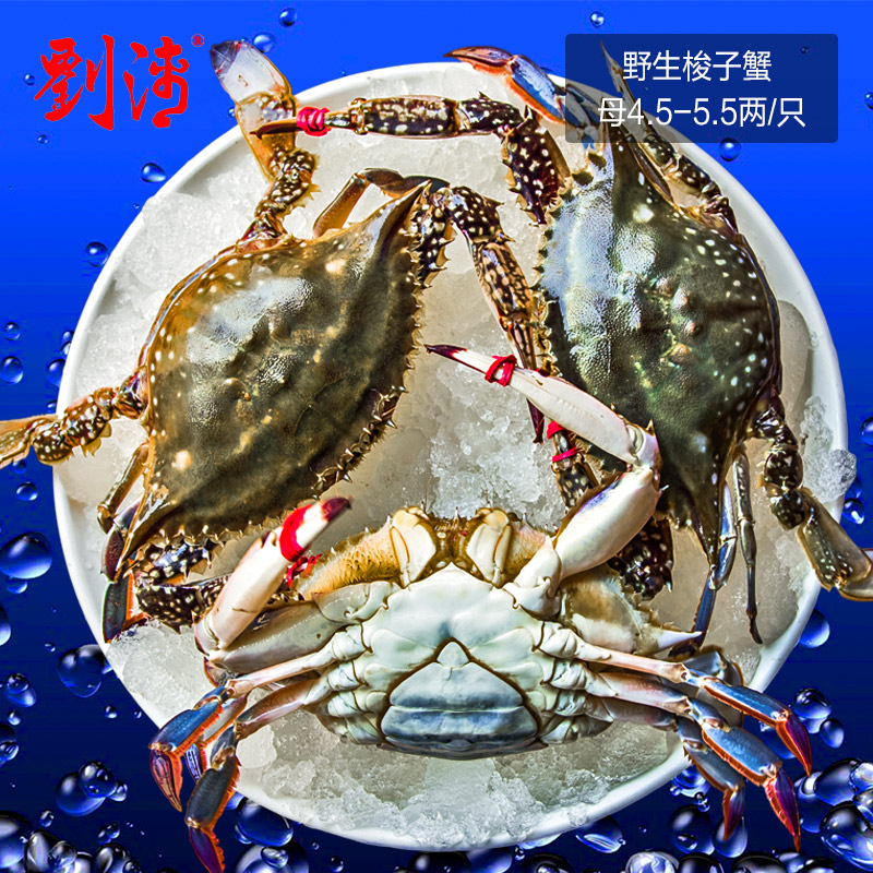 Liu qinghai fresh wild seafood dalian donggou fly fresh blue crab crab crab 1000g fresh white crab live crab mother