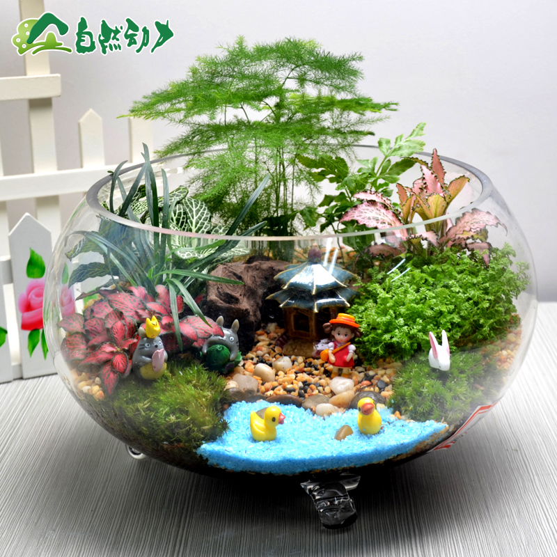 Moss micro landscape asparagus potted plants flowers desktop combination with a combination of plant ecology bottle creative gifts