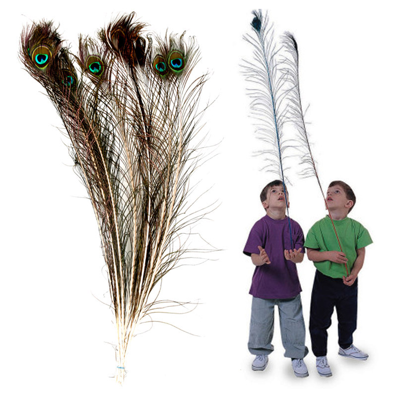 Natural real peacock feathers peacock feather eyes of the physical 80cm vase decoration toy 1 0 10æ ¹loaded