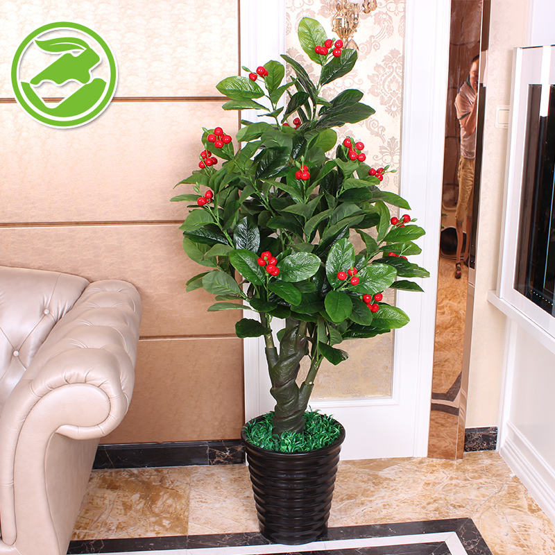 China Indoor Fruit Plants, China Indoor Fruit Plants Shopping ...
