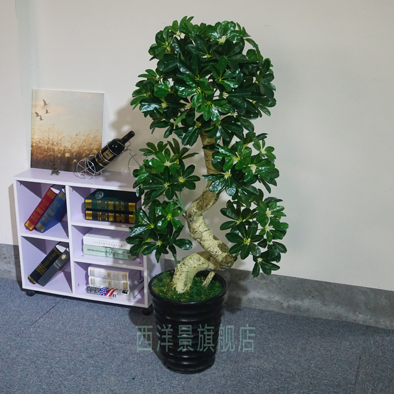 China Money Plant Tree China Money Plant Tree Shopping Guide At